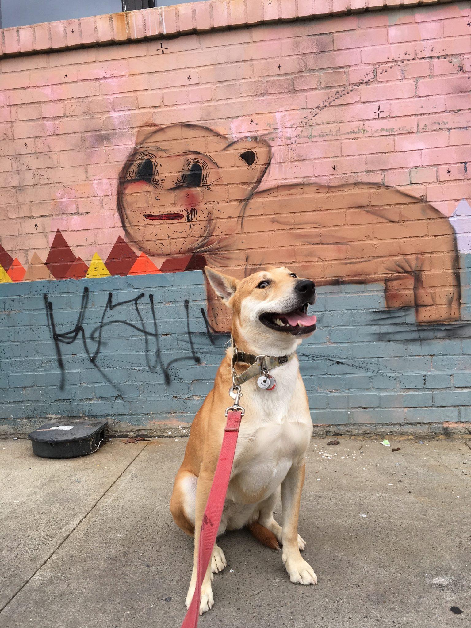 Dog Boarding, Brooklyn