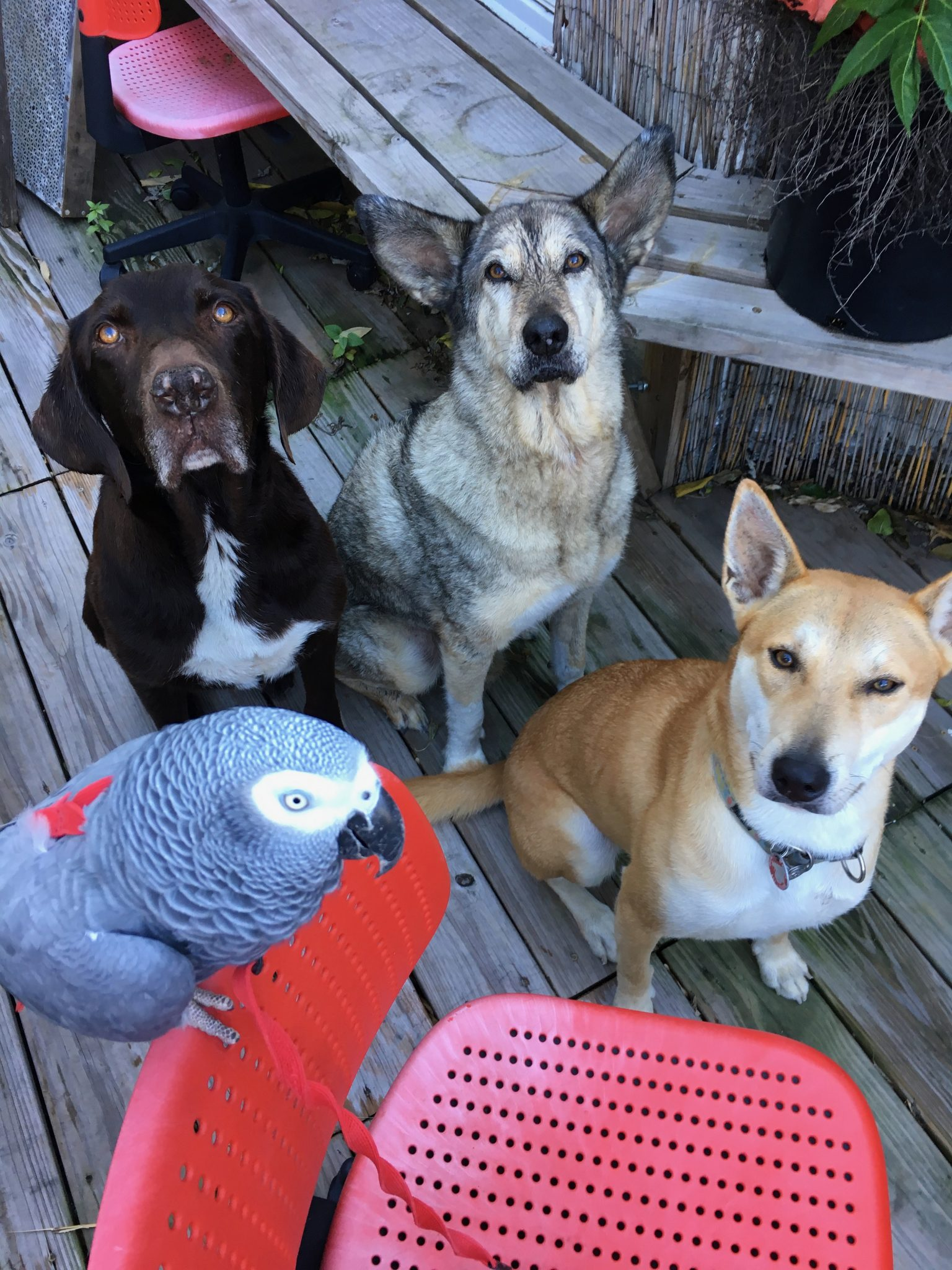 Dog boarding Brooklyn customers will be hanging out with this gang.