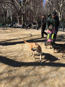 Dog Friendly parks in NYC Washington Square 2