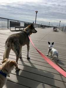 Dog Friendly parks in NYC Coney Island.
