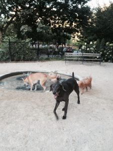 Dog Friendly parks in NYC Washington Square