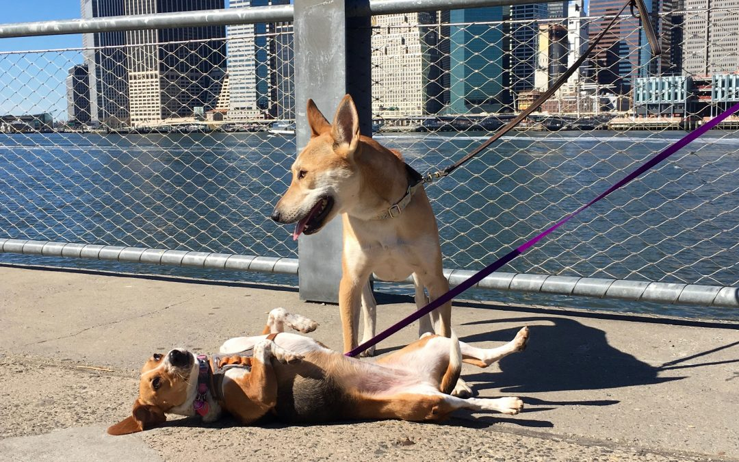 5 Dog Friendly Parks in the NYC Area.