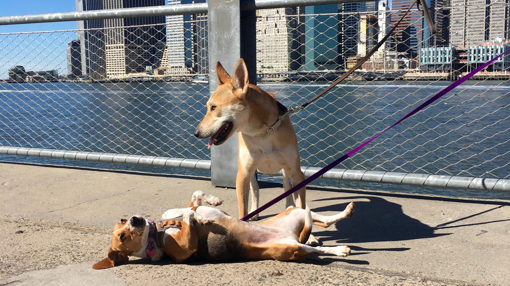 Day Trips With Dogs Nyc