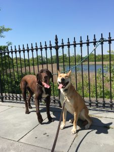Dog Friendly parks in NYC NYC Highland Park