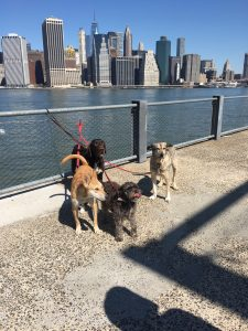 Dog Friendly parks in NYC Brooklyn Bridge Promenade
