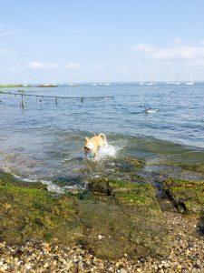 Dog Friendly parks in NYC Larchmont doggie beach