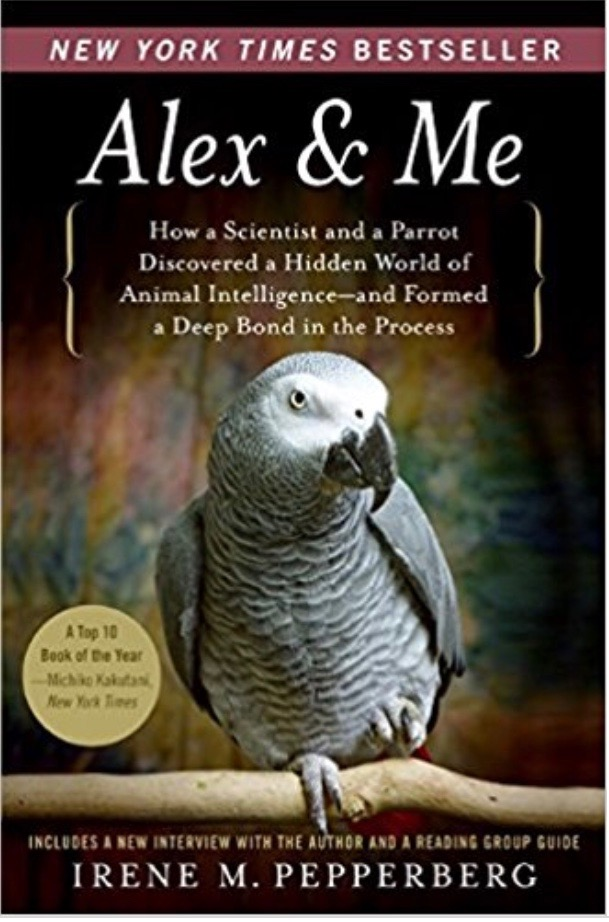 gift guide for parrot lovers alex and me