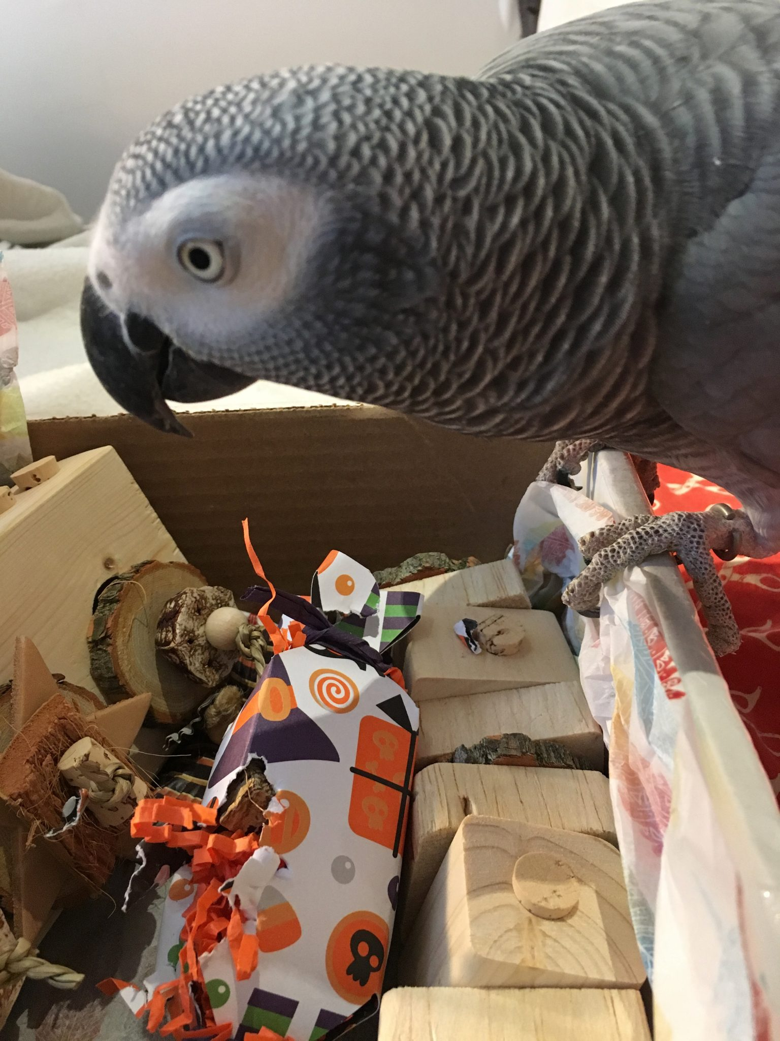 gift guide for parrots chasing enrichment coco